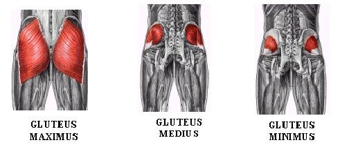 http://www.posturesorted.com/glute-exercises-without-weights-great-posture/
