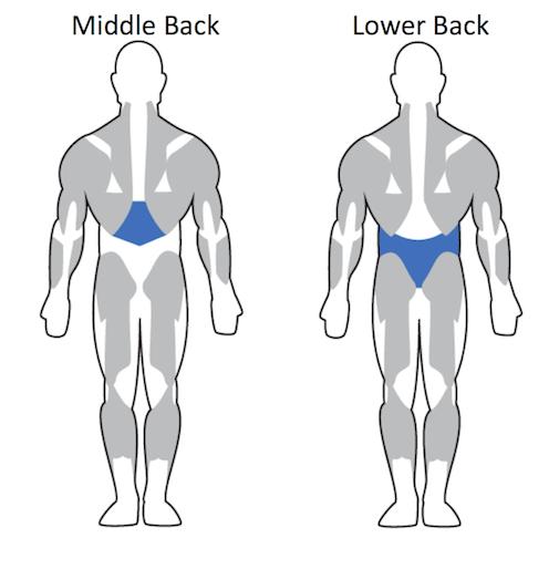 http://elitemensguide.com/resistance-training-upper-body-muscles/