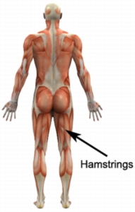 http://www.physioadvisor.com.au/8285950/hamstring-exercises-hamstring-strengthening-exer.htm