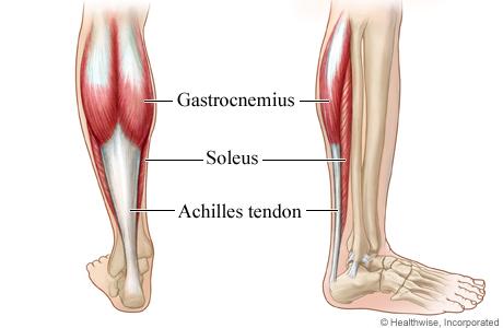 https://noexcuseshealth.wordpress.com/2013/05/09/leg-exercise-calf-raises/