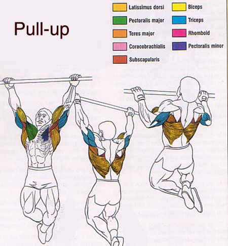http://www.northadelaidefitness.com/personal-trainers-favourite-exercises-1-the-chin-up/