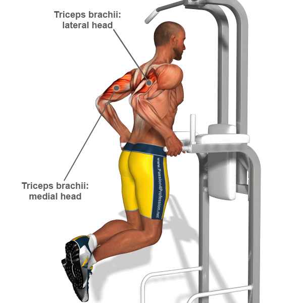 http://exercisesbest.us/art-of-strength/best-tricep-exercises-for-men.html