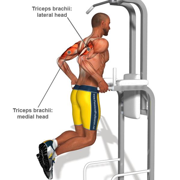 http://exercisesbest.us/art-of-strength/best-tricep-exercises-for-men.html