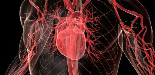 http://functionalfitnessover40.net/basic-training-course/cardiovascular-exercise/